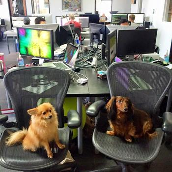 Causecast - Bring your pet to work- We love our furry friends at Causecast!