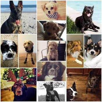 Sprinklr, Inc. - Furry friends are welcome