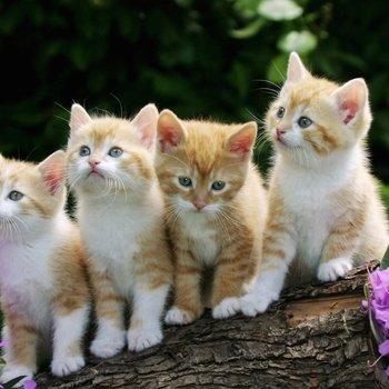 Fluc, Inc - Free kittens