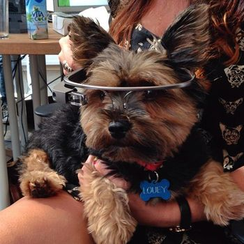 Betaworks One, Inc. - pets get a complimentary google glass