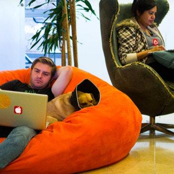 HealthTap - Comfy and Hard at Work