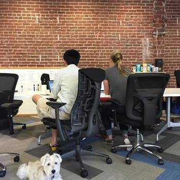 Vurb - Dog friendly office