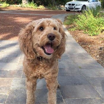 Magic Instruments, Inc. - Simba - our company dog, loves the outdoors, can play the MI guitar