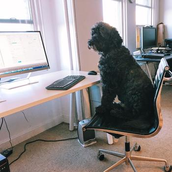 Itemize LLC - We are a dog friendly office.