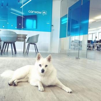 Carwow - Moshi, our office dog