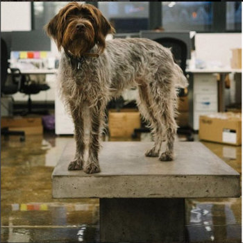 Quip Nyc Inc. - Dogs welcome