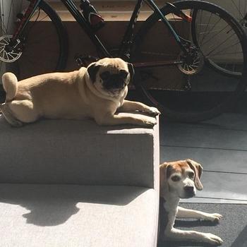 Apollo - Sunbathing office pups!