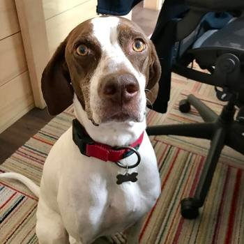 Embroker - Friendly dogs sometimes join their humans at the office