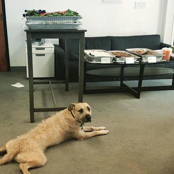 Numerator - We understand that work can be ruff... have some free food on InfoScout!
