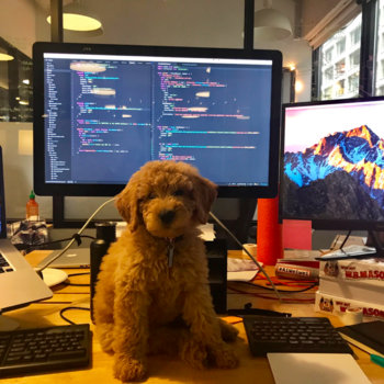 Fraight AI - Marlow is our Chief Dog Officer