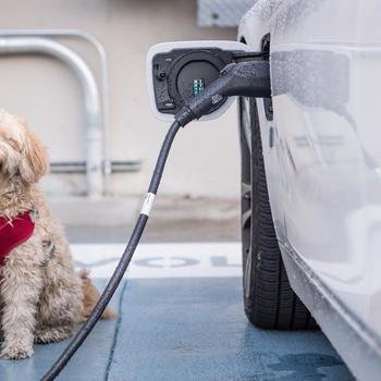 Volta Charging - Free EV Charging onsite is made even better with our office dogs.