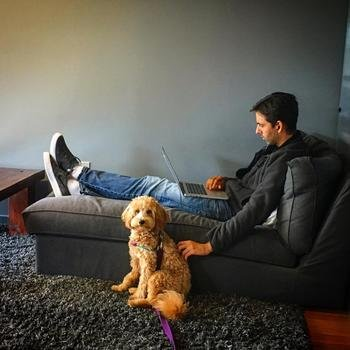 Serverless, Inc. - Bumper loves team members who can work and pet at the same time.