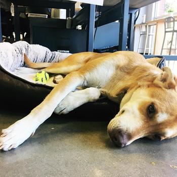 Koupon Media - We offer a pet friendly environment!