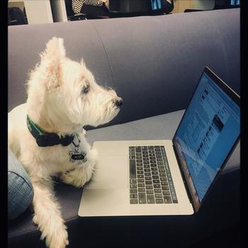 Vimeo - We love our dogs, and we'll love yours too.