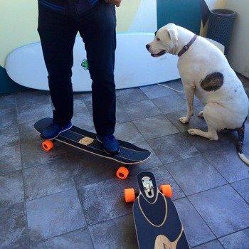 Sensay - we have cool board meetings