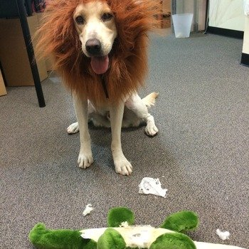 August Home, Inc. - Dogs, err...Lions are welcome. Stuffed Alligators...not so welcome.