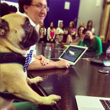 Blue State Digital - We like our dogs at BSD.