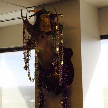 Inforeliance LLC - Our Facilities Manager put the deer head in our AWS Directors office as a prank - the Recruiting Team added the festive decor. Mardi Deer!