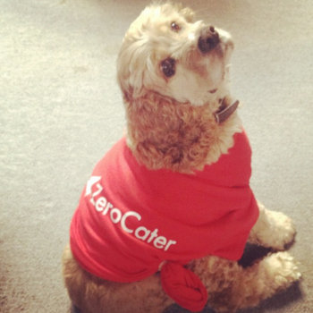 ZeroCater - Yes, we have awesome dogs at our office!