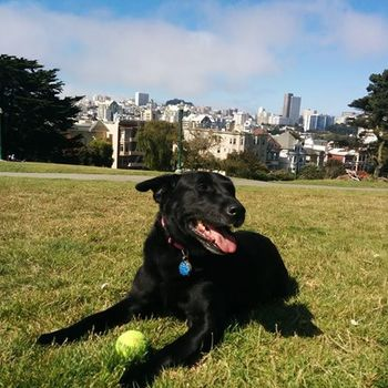 Disqus - We love our pups! (We're a dog-friendly office.)