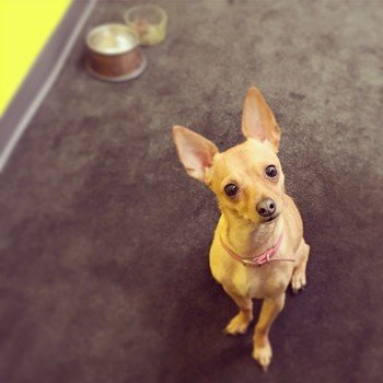 Docler Media, LLC - Our offices are pet-friendly! Just ask the in-house mascot, Jelly Bean.