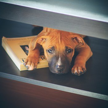 Anagram - Apollo makes sure that we work hard. Otherwise he puts on the sad puppy eyes.