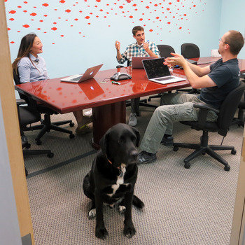 BloomReach - We have a CCO (Chief Canine Officer)