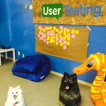 UserTesting - Yay to a pet friendly office!